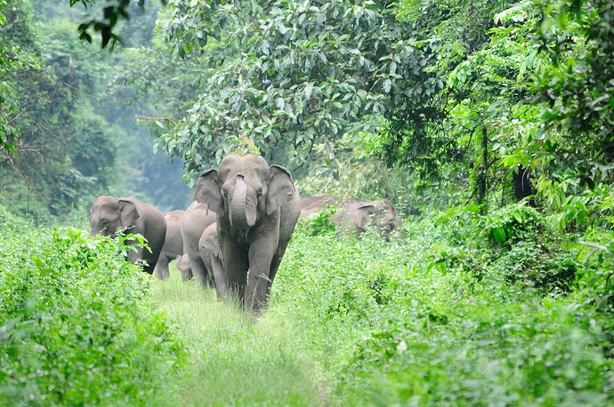 An elephant in the wild. Credit: awlw/pixabay